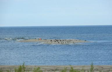 Rezerwat Mewia Łacha - na tej wysepce chętnie wypoczywają foki