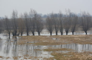 Żuławska wiosna. Widok z wałów przeciwpowodziowych w Kiezmarku.
