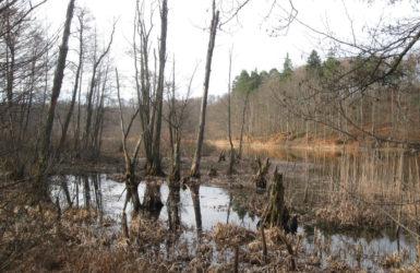 Jezioro Otomińskie zachwyca o każdej porze roku.